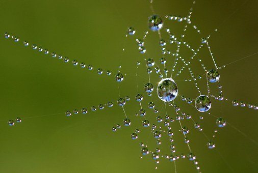 Spinneweb positieve gezondheid